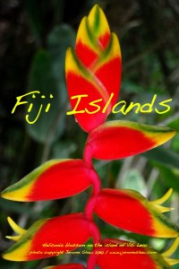 Heliconia Blossom at the Fiji Orchid Resort on the island of Vitu Levu, Fiji Islands. Copyright Jerome Shaw 2012/www.JeromeShaw.com