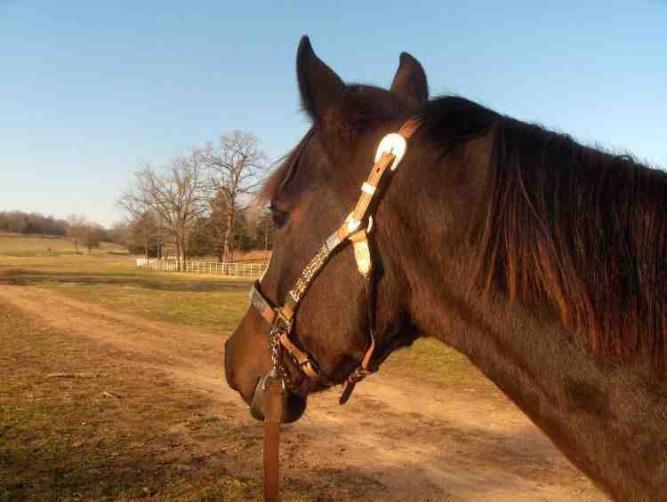 How to become a Horse Trainer > Career Options – Job Shadow